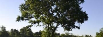 Zielone drzewo, trawa, błękitne niebo