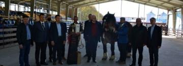 Uczestnicy konkursu  64.Wystawa – Sprzedaż ogierów  zimnokrwistych – rasy Polski Koń Zimnokrwisty w Szepietowie