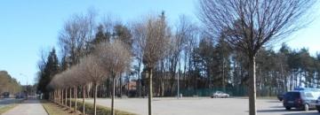 Wiosenne nasadzenia w Augustowie rozpoczęte