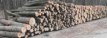 Burmistrz Miasta Augustowa ogłasza II przetarg nieograniczony na sprzedaż drewna opałowego