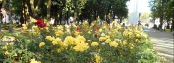 Podziękowanie za oddane głosy w konkursie Terra Flower Power 2016 r. - Najpiękniej Ukwiecone Miasto w Polsce